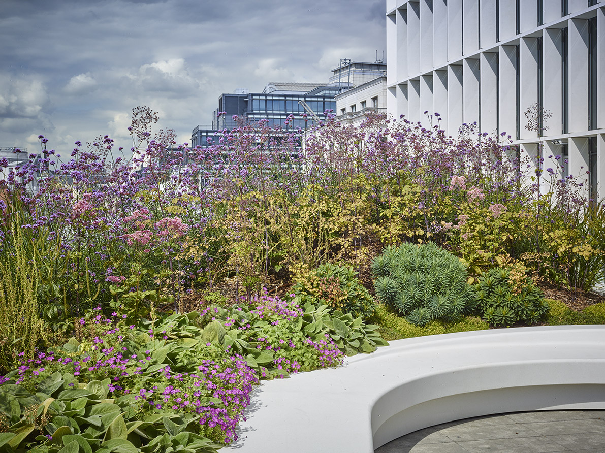 new ludgate planting 2